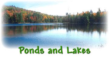 Image result for pond vs lake