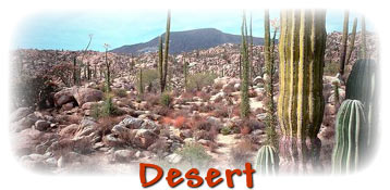 Desert Plants And Animals For Kids