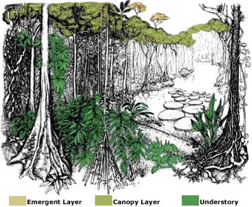 Tropical Rainforest Layers Animals