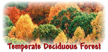 vvebiomes3 / Temperate Deciduous Forest Physical Features