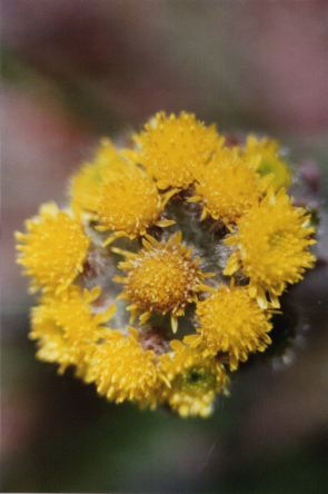 Tundra plants mightylinksfo