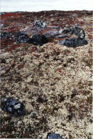 Tundra Plants Mbgnet | Autos Post